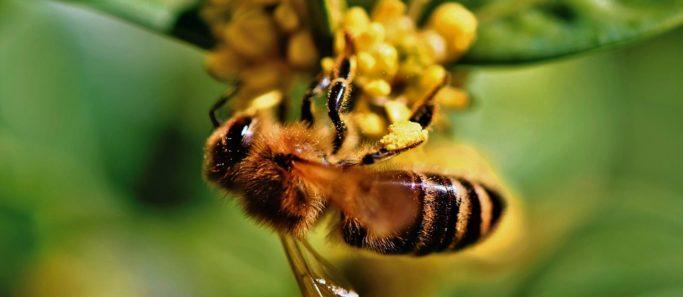 abeilles-socialMag
