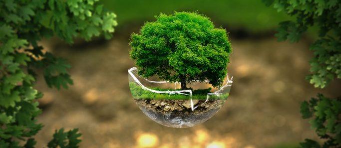 environnement-SocialMag