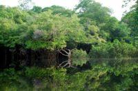 amazonie ecosysteme danger imminent - SocialMag