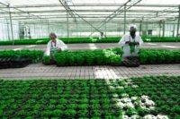 bioplants innovation agricole exemplarite environnementale - Social Mag
