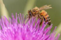 france interdit vente deux pesticides nuisibles abeilles - SocialMag