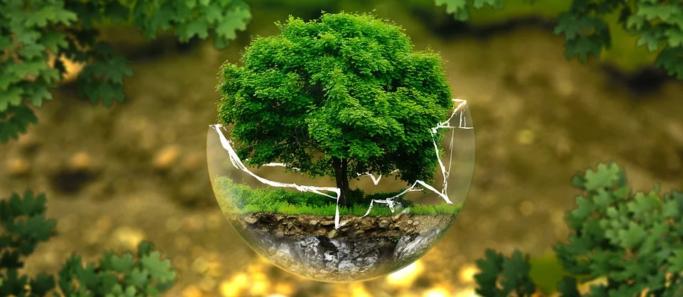 conseil constitutionnel sanctifie protection environnement - Social Mag