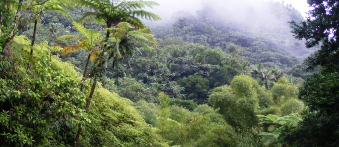 forets tropicales capter co2 - Social Mag