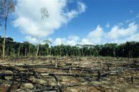 foret amazonienne voie disparition - SocialMag