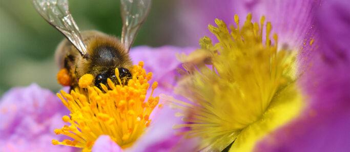 projet loi prolonger usage pesticides neonicotinoides - Social Mag