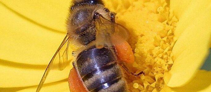 neonicotinoides-retour-pesticides-tueurs-dabeilles - SocialMag