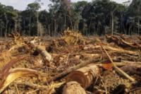 amazonie lobjectif moins 10 deforestation nest pas atteint - SocialMag