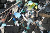 wwf cout plastique serait dix fois superieur couts production - SocialMag